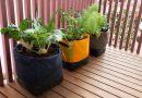Um kit de agricultura urbana para principiantes