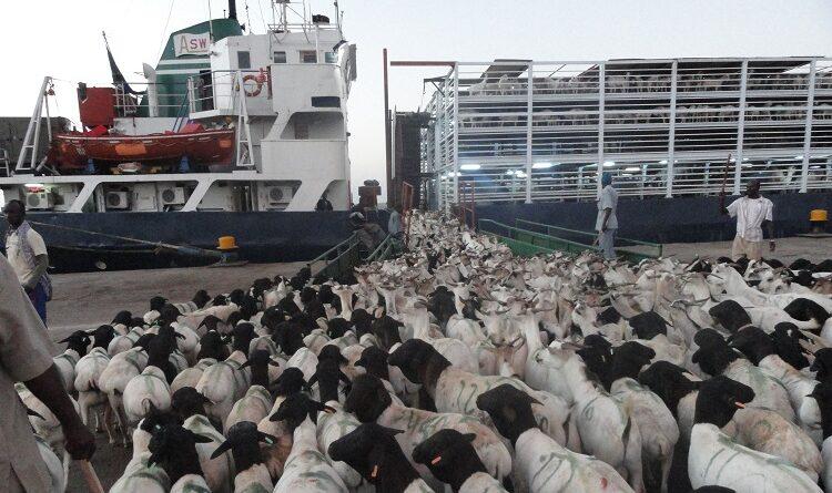 A Nova Zelândia põe fim à exportação de animais vivos